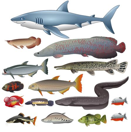 Freshwater fish set. illustration of different types of fish Vettoriali