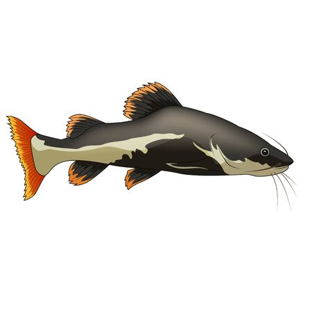 Cartoon funny catfish on white background