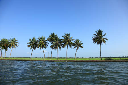 alleppey: Coconut trees along the backwaters of Kerala, India.