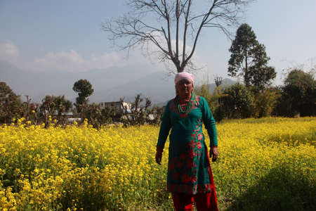 pokhara: POKHARA, NEPAL - FEB 06,2014- An unidentified woman stands in front of her mustard farm in Pokhara, Nepal. Pokhara is a popular tourist destination known for trekking and boating.