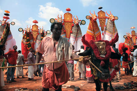 bullock: NOORANAD, INDIA - FEB 18,2015-Unidentified man with a holy cow stand infront of bullock effigies during the festival at Padanilam Parabrahma temple  in Nooranad,Kerala, India Editorial