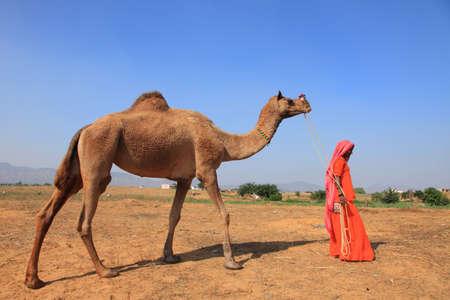 camello: Pushkar, India - noviembre 19,2010-Una mujer del pueblo no identificado con su camello recién comprado en la feria de Pushkar en Pushkar, India. Los camellos son los animales más vendido en la Feria de Pushkar.