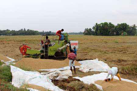 farm implements: ALLEPPEY, INDIA - APR 03,2015-Unidentified farmers engage in the post harvest jobs in the rice fields  in the Kuttanad region in Alleppey, Kerala, India Editorial