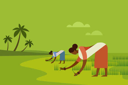 Two women agricultural workers planting paddy seedling in the field