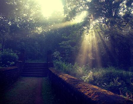 thorough: Sun beams thorough trees and greens Stock Photo