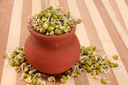 Hydroponically grown mung bean sprouts on pot and wood background Stock Photo
