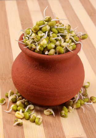 Hydroponically grown mung bean sprouts on pot with wooden backdrop for culinary use Stock Photo