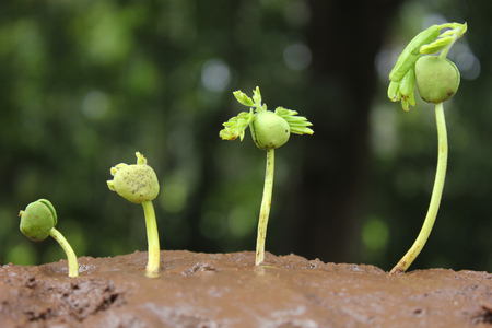 trees growing on fertile soil in germination sequence  growing plants  plant growth Stock Photo