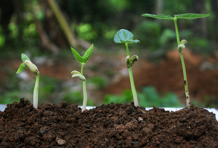 Plant germination and growth - seedling,Plant growth-Stages of growing plants