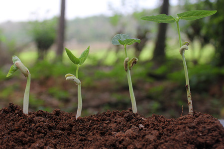Plant growth-Stages of growing plants Stock Photo