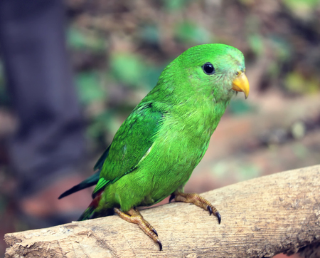 young Green Parrot on a branch in the forest Stock Photo