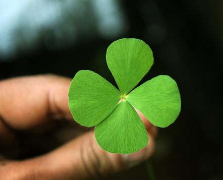 four leaf clover in hand .good luck leaf