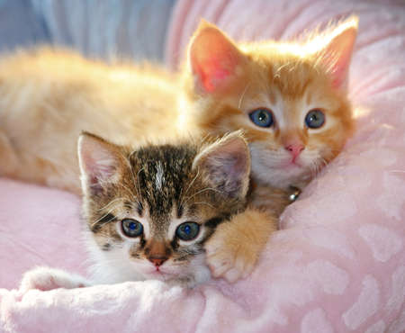 Two young kitties