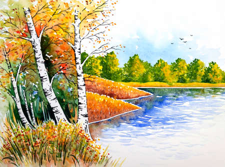 Birches at the lake Standard-Bild