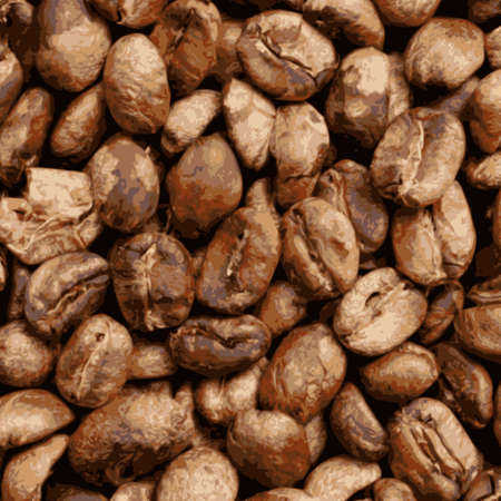organic brown coffee beans vector Illustration
