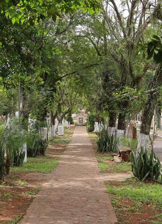 Tree Aregua, Paraguay