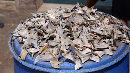 Shark fins on the fish market