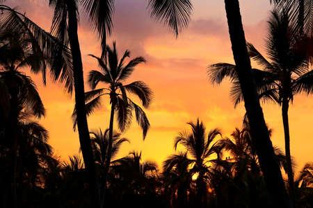Palms silhouettes at orange sunset sky Stock Photo