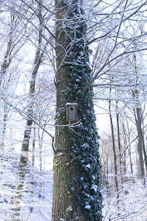 Birdhouse - Birds nest - snow covered Stock Photo