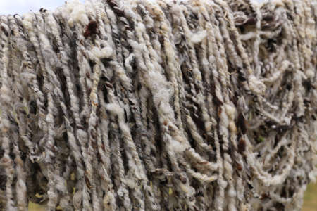 Sheep Wool fresh spinned Stock Photo