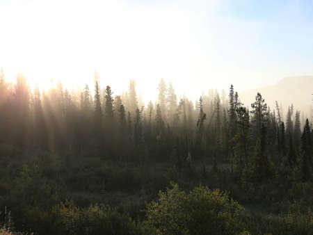 Misty tundra forest Stock Photo