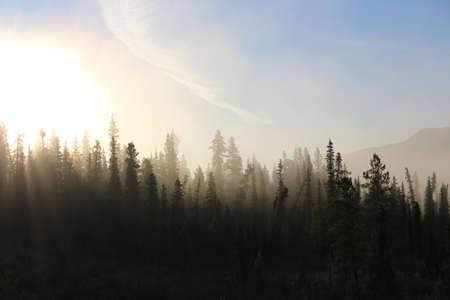 Misty tundra forest 写真素材