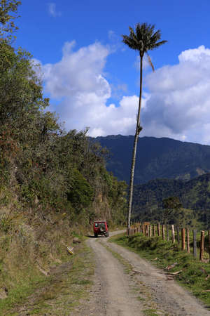 A tall wax palm tree beside a car, tallest palm, ceroxylon quindiuense, Cocora valley in Colombia