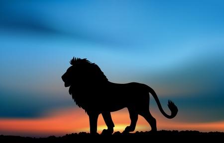 석양에 아프리카 사자입니다. 삽화