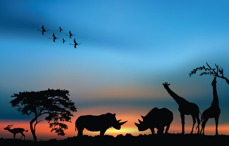 African wildlife sunrise. African safari illustration card Stock Photo