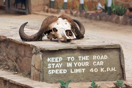 tsavo: African buffalo (Sincerus caffer) skull at the Tsavo East National Park, Kenya Editorial