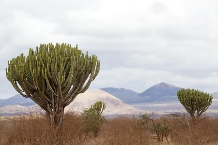 African Savanna Landscape With