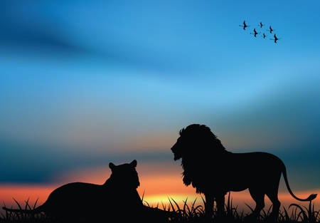 일몰 아프리카 사바나에서 사자와 암 사자