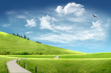 풍경 : 흐린 하늘에서 나무와 비행 독수리와 언덕 사이 시골 길