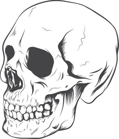 Skull on the isolated background Stock Vector - 14523574