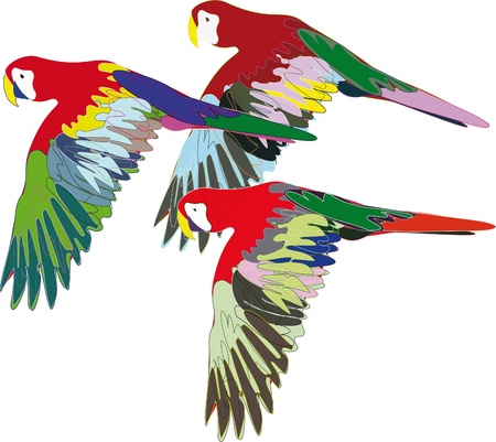 ara: Parrots are flying on isolated background