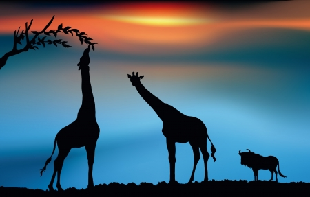 African savanna with giraffes and wildbeest at dawn Vector