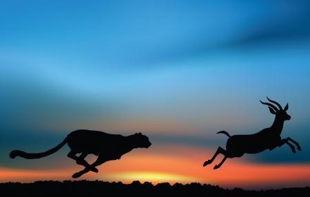 Afrikanische Jagd: Gepard jagt eine Antilope im Sonnenaufgang