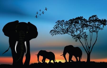 새벽에 사바나에서 아프리카 코끼리 일러스트