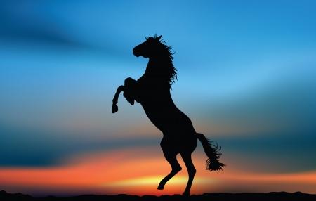 Pferd in den Sonnenuntergang Illustration