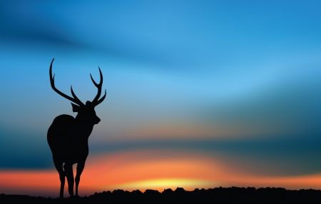 Deer at the sunset Illustration