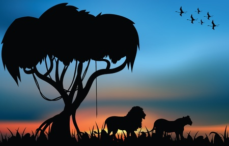 Lion and lioness in the african savanna at the sunrise Illustration