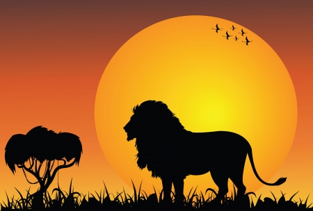 Lion in the african savanna at the sunrise