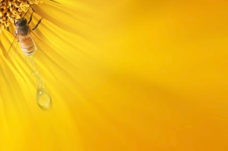 Biene auf der Sonnenblume und ein wenig Tropfen Wasser