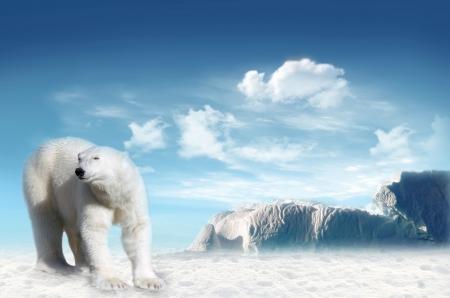 북극의 북극곰 (Ursus maritimus) 백그라운드에서 푸른 하늘과 구름과 팩 스톡 콘텐츠