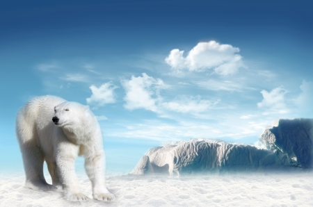 Polar bear (Ursus maritimus) in the Arctic pack with blue sky and cloud in the background