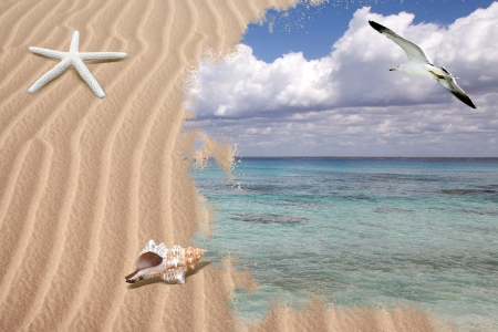 Seascape: beach with shells and seagull flying over the tropical sea
