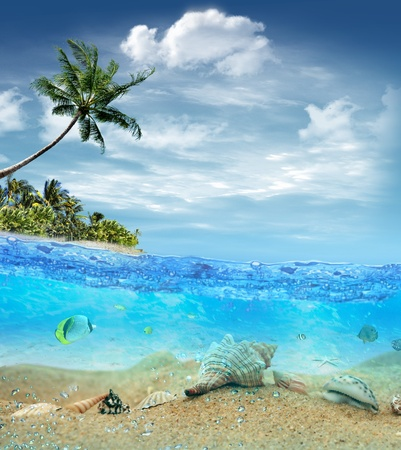 pal: Underwater life near the beach of the tropical island
