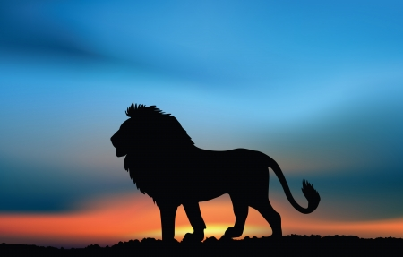 African lion at the sunset Illustration