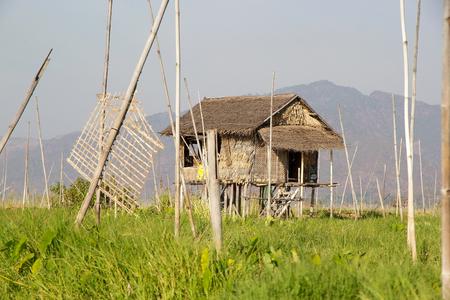 tierra fertil: Choza Cig�e�uela entre los jardines flotantes en el lago Inle, Estado de Shan, Myanmar. Tradicional m�todo de la agricultura wich utiliza una peque�a �reas rectangulares de tierra f�rtil para cultivar en el lecho de un lago poco profundo