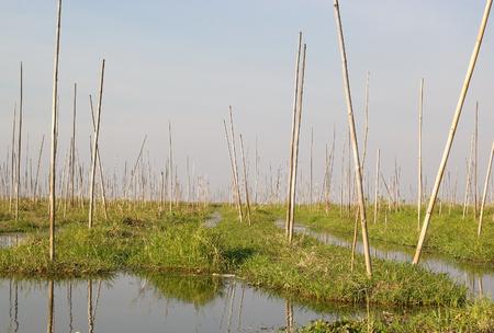 tierra fertil: A jardines flotantes en el lago Inle, Estado de Shan, Myanmar. Tradicional m�todo de la agricultura wich utiliza una peque�a �reas rectangulares de tierra f�rtil para cultivar en el lecho de un lago poco profundo